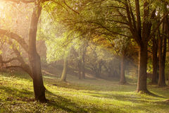 Ray of light through the trees in the misty morning.  Stock Photo