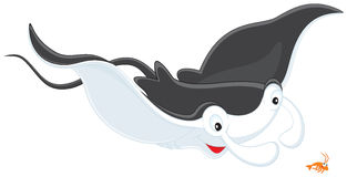Ray Manta and krill. Vector clip-art illustration of a big devilfish and small krill Royalty Free Stock Image