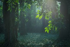 Ray Of Sunlight In Fairy-tail Forest Stock Image