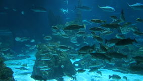 Ray, shark and everal other fishes in the aquarium of Barcelona, Spain stock footage
