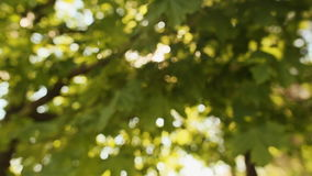 Ray of sun flashes through the foliage.  stock footage