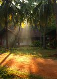 Ray of sunlight. At morning tropical resort, Kerala, India Stock Images