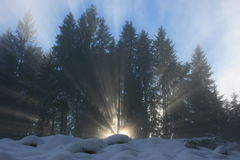 Ray of sunlight through forrest Royalty Free Stock Image