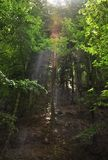 Ray of sunlight making the way through the treetops Stock Photo