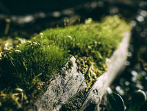 Ray of sunshine in a damp forest green moss covers Stock Image