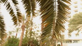 A ray of sunshine through the palm leaves, palm against the blue sky, the sun shines, crown of palm leaves on a stock footage