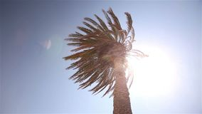 A ray of sunshine through the palm leaves, palm against the blue sky, the sun shines, crown of palm leaves on a stock video footage
