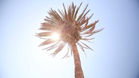A ray of sunshine through the palm leaves, palm against the blue sky, the sun shines, crown of palm leaves on a stock video