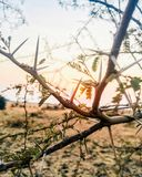 Ray of sunshine with thorny plants golden royalty free stock image