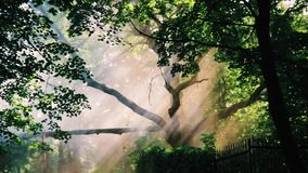 A ray of sunshine through the trees. 1 stock footage