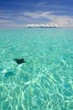 Ray swimming in blue lagoon Stock Photos