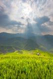 Ray van lichte en Mooie aardpadievelden op terrasvormig van Vietnam De padievelden bereiden de oogst in Noordwestenvietnam voor Royalty-vrije Stock Fotografie