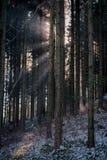 Ray van zonlicht in het bos royalty-vrije stock afbeelding