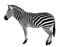 Rayas aisladas del negro del vector de la silueta de la cebra stock de ilustración