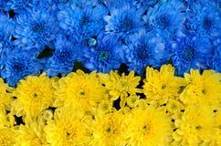 Rayas azules y amarillas con las flores coloreadas (bandera de Ucrania, Fotografía de archivo