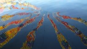 Rayas coloridas en el agua foto de archivo