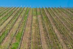 Rayas del viñedo y cielo azul foto de archivo