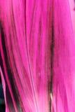Rayas rosadas de la hoja Imagenes de archivo