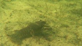 Rayfish del ¡de Ð metrajes