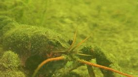 Rayfish do ¡ de Ð vídeos de arquivo
