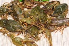 ?rayfish lat. Astacus astacus is a species of decapod crustacean of the infraorder Astacidea. Eaten stock image