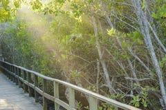 Raylights at Trail, Galapagos, Ecuador. Raylights at wooden bridge in touristic trail in Galapagos islands, Ecuador Stock Photo