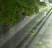 Rayo de esperanza. Imagen de archivo libre de regalías