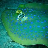 Rayo de picadura manchado azul Imagenes de archivo