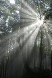 Rayo de sol Imágenes de archivo libres de regalías