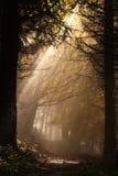 Rayo de sol imagen de archivo