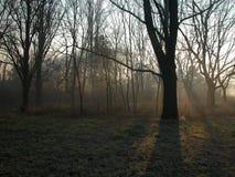 Rayo de sol Fotos de archivo
