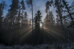 Rayo de sol en el bosque blanco de Frost fotos de archivo libres de regalías