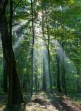 Rayo de sol que entra en el bosque de hojas caducas rico Foto de archivo libre de regalías