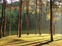 Rayo de sol a través del bosque Imágenes de archivo libres de regalías