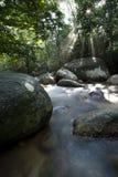 Rayo de Sun del bosque Fotografía de archivo libre de regalías
