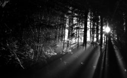 Rayo en el bosque imagenes de archivo