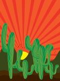Rayo solar del fondo del cactus Fotografía de archivo libre de regalías