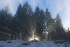 Rayon de lumière du soleil par forrest image libre de droits
