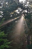 Rayon de soleil Photos libres de droits