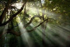 Rayon de soleil d'arbre Image libre de droits