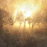 Rayon de soleil d'arbre images libres de droits