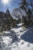 Rayon de soleil 4 d'hiver Images libres de droits