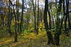 Rayon de soleil dans la forêt Image stock