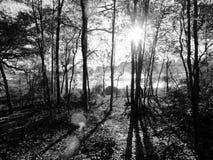 Rayon de soleil dans la forêt Photographie stock