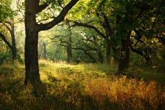 Rayon de soleil de matin Images stock