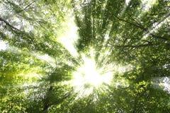 Rayon de soleil par des arbres image libre de droits
