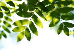 Rayon du soleil Photographie stock libre de droits