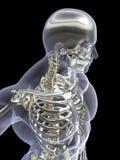 Rayon X de squelette d'argent et d'or Photo libre de droits