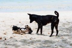 Rayong, Tailandia - abril, 28, 2017: Perro en la playa en la KOH Fotografía de archivo libre de regalías