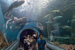 Rayong, TAILANDIA - 9 aprile: Turisti al tunnel acquatico in Th fotografia stock libera da diritti